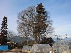 2013.01.19.kanai5.JPG