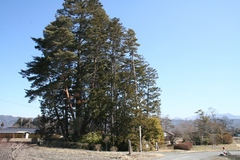 2013.03.08.kamitoba8.JPG