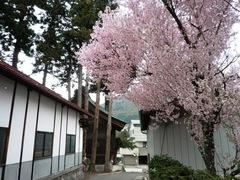 2013.03.08.koyasu18.JPG