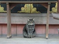2013.04.06.yasuikonpira12.JPG