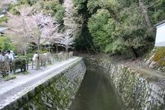 2013.04.07.ootoyo4.JPG