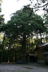 2013.08.13.takekoma27.JPG