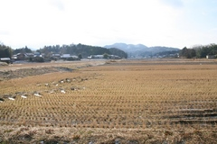 2013.12.30.tsuge2.JPG
