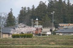 2014.04.20.shoushina3.JPG