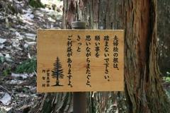 2014.05.04.ikara9.JPG