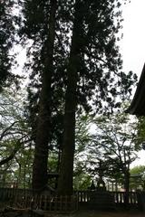 2014.05.04.omiyasuwa6.JPG