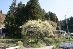 2014.05.04.wakamiya1.JPG