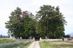 2014.10.12.byakko1.JPG