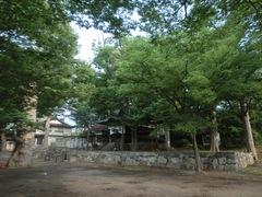 20150616tsumashina35.JPG