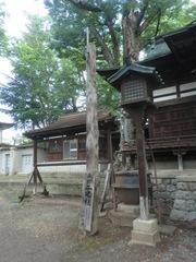20150616tsumashina7.JPG
