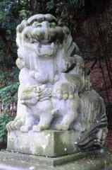 namiyanagi2.JPG