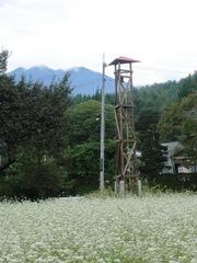 2012.09.04.shingyou8.JPG