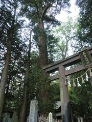 2013.03.08.oomiyaatsuta3.JPG