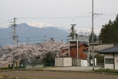 2014.04.20.shoushina4.JPG