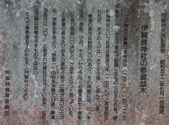 2014.05.04.ikara3.JPG