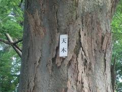 20150616tsumashina14.JPG