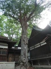 20150616tsumashina15.JPG
